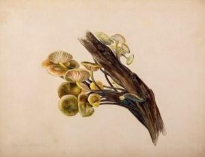 Beatrix Potter fungi