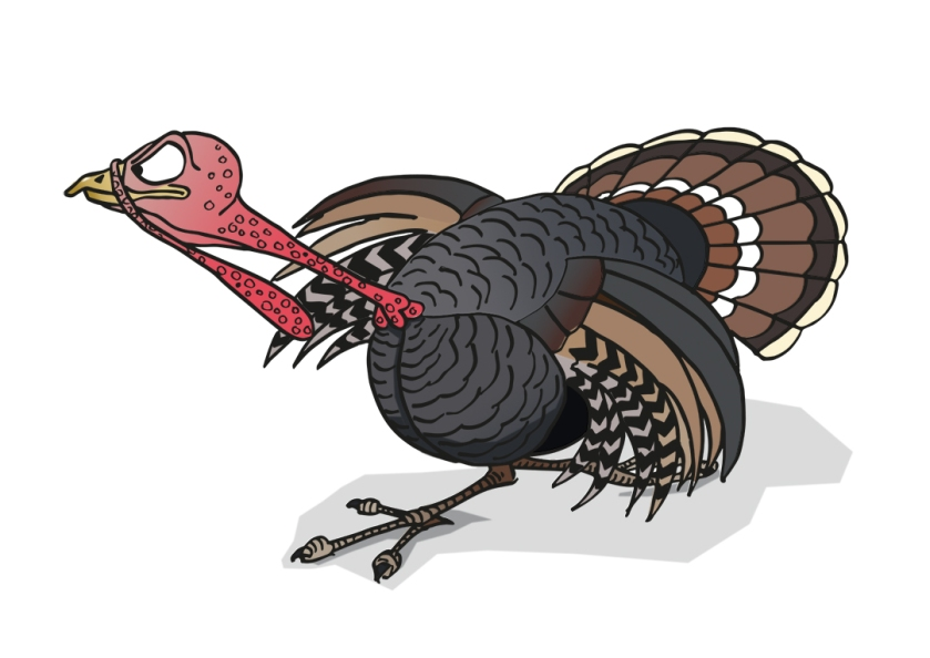 Angry turkey artwork